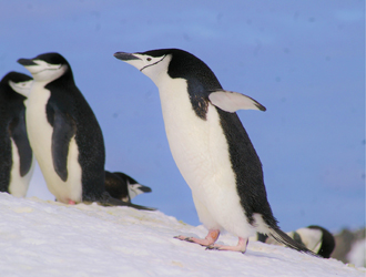 antarctique 2